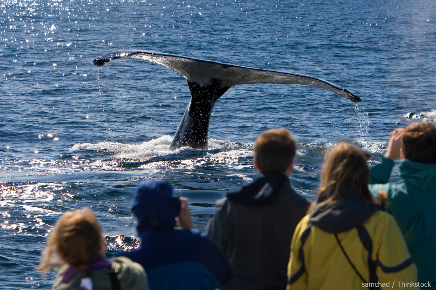 Boothbay Harbor Whale Watching Tour