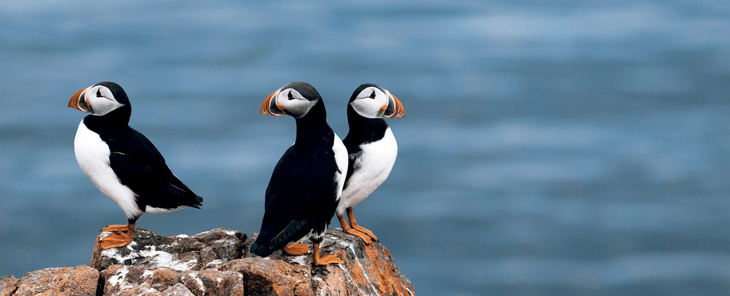 Take a boothbay harbor maine puffin cruise this summer!