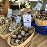 Mushrooms at the Boothbay Farmers Market