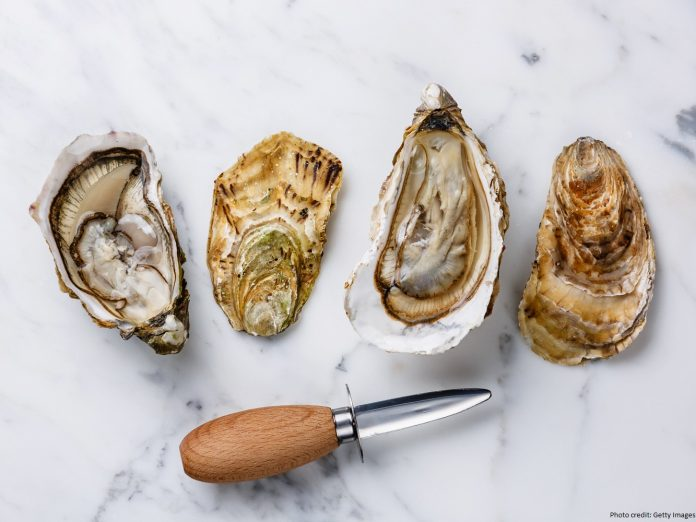 Shucked oysters at the Pemaquid Oyster Festival