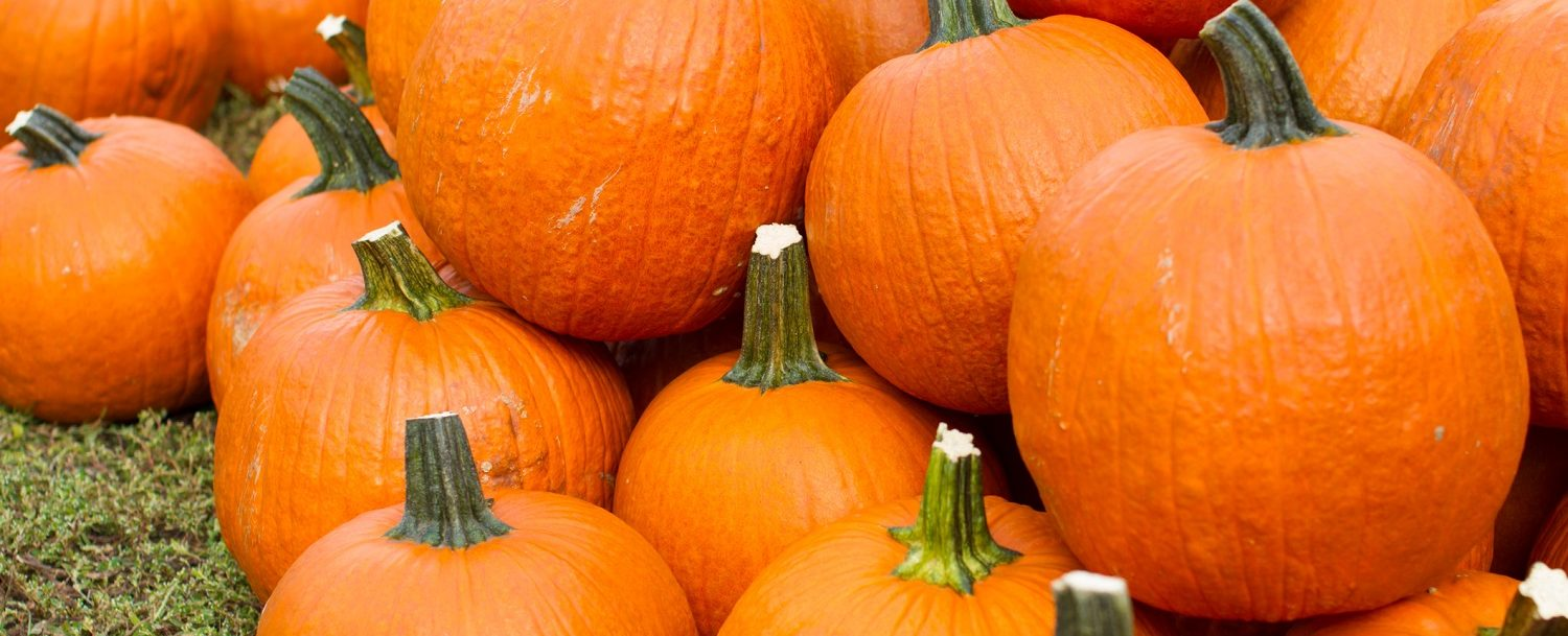 Pumpkins at the Damariscotta Pumpkinfest