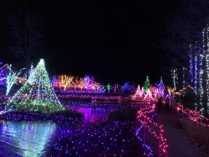 Holiday lights during Gardens Aglow at the Coastal Maine Botanical Gardens