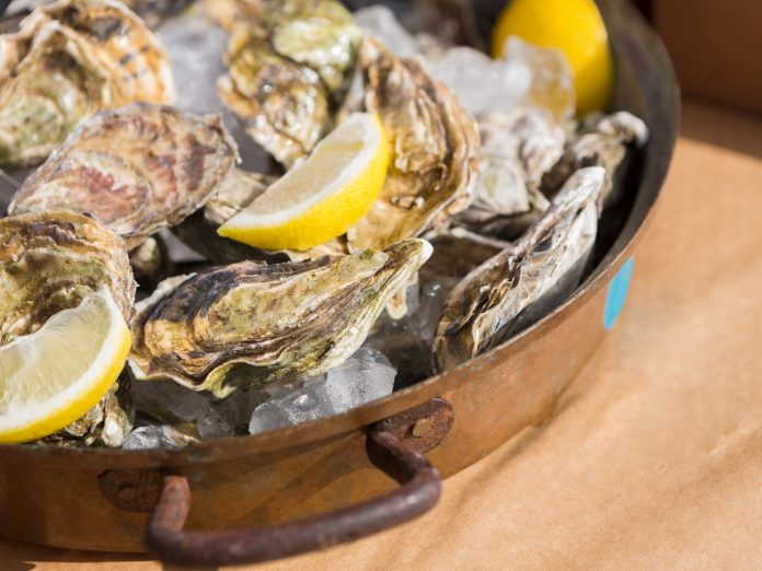 Oysters and lemon slice on ice at the Damariscotta Oyster Celebration